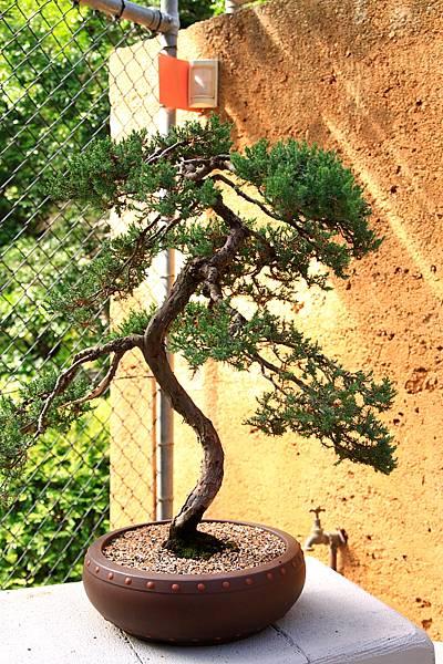 Botanic Gardens_15.JPG