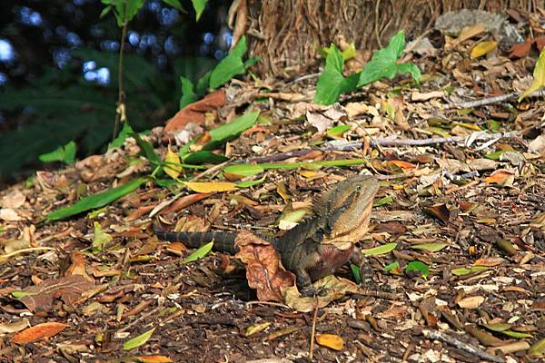 Botanic Gardens_06.JPG