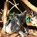 Koala_08.JPG