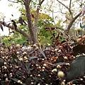 Botanic Gardens_51.JPG