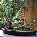 Botanic Gardens_09.JPG
