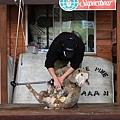 dog sheep show_11.JPG