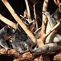 Koala_06.JPG