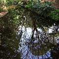 Botanic Gardens_05.JPG