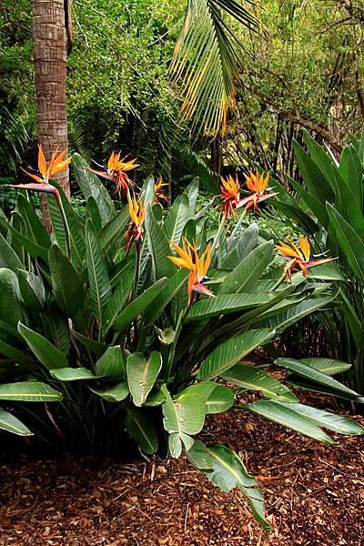 Botanic Gardens_35.JPG