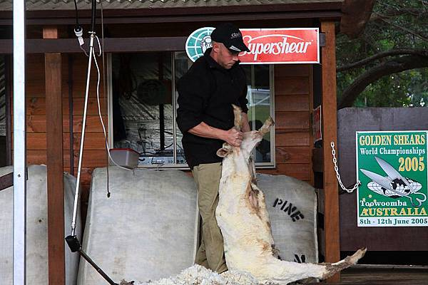 dog sheep show_12.JPG