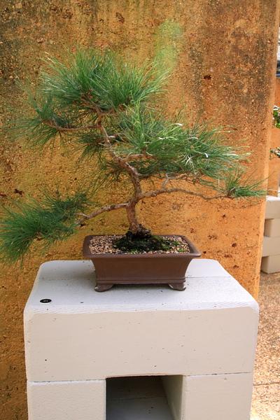 Botanic Gardens_18.JPG