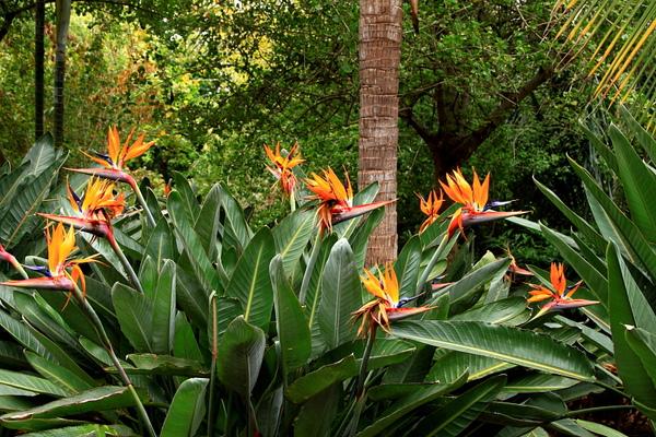 Botanic Gardens_36.JPG