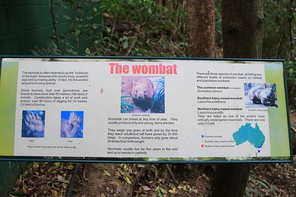 Wombat_01.JPG