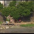 樹屋.jpg