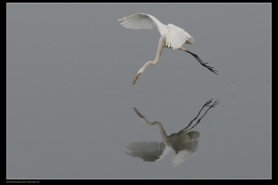 白鷺鷥7.jpg