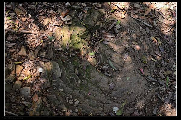 洋蔥石.jpg
