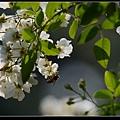 野薔薇3.jpg