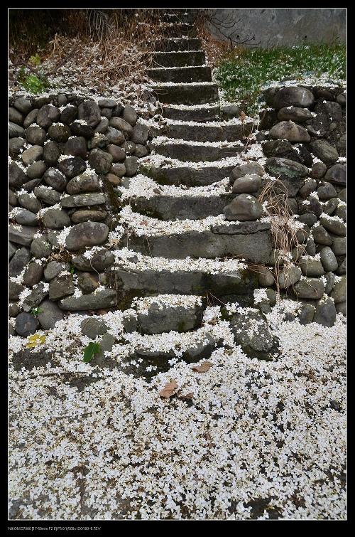 階梯.jpg