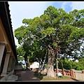 安平古堡大樹.jpg