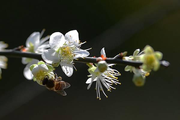 蜜蜂8.jpg