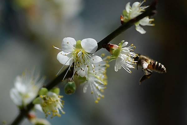 蜜蜂10.jpg