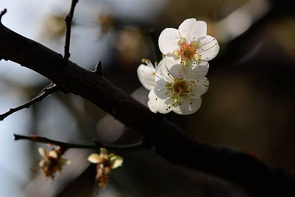 蜜蜂14.jpg