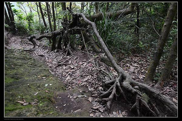 樹幹.jpg