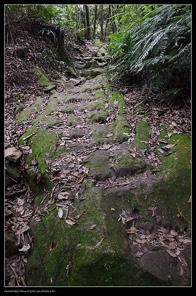 步道2.jpg