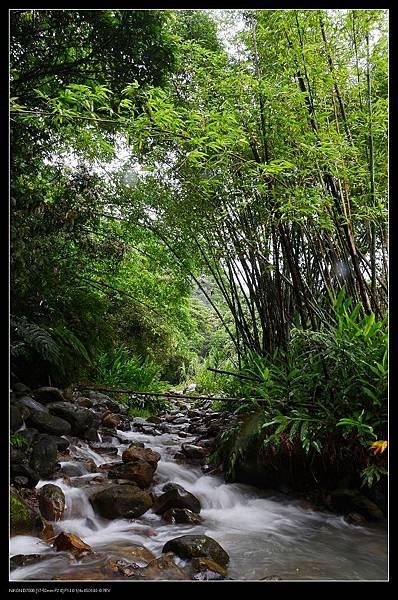 竹林流水.jpg