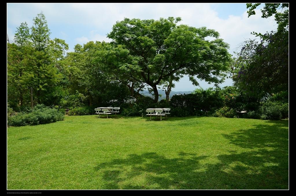 草坪大樹.jpg