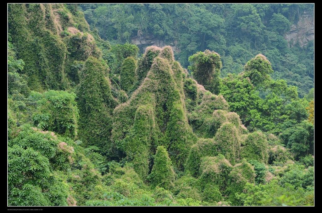 寄生植物.jpg