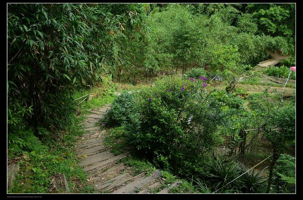 登山步道2.jpg