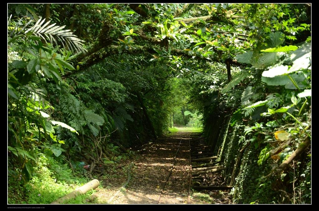 綠色隧道.jpg