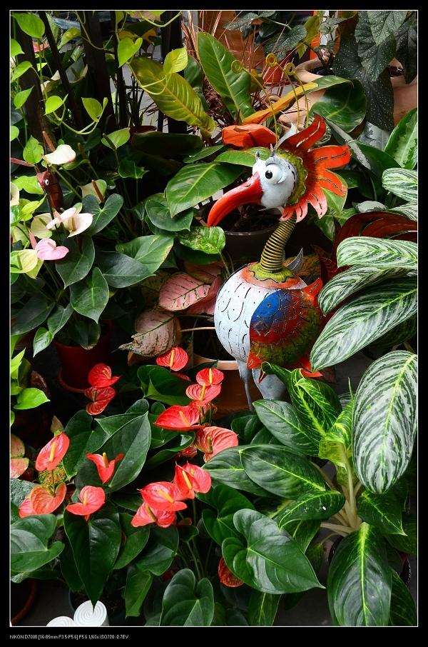 彩色鳥.jpg