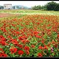 紅花.jpg
