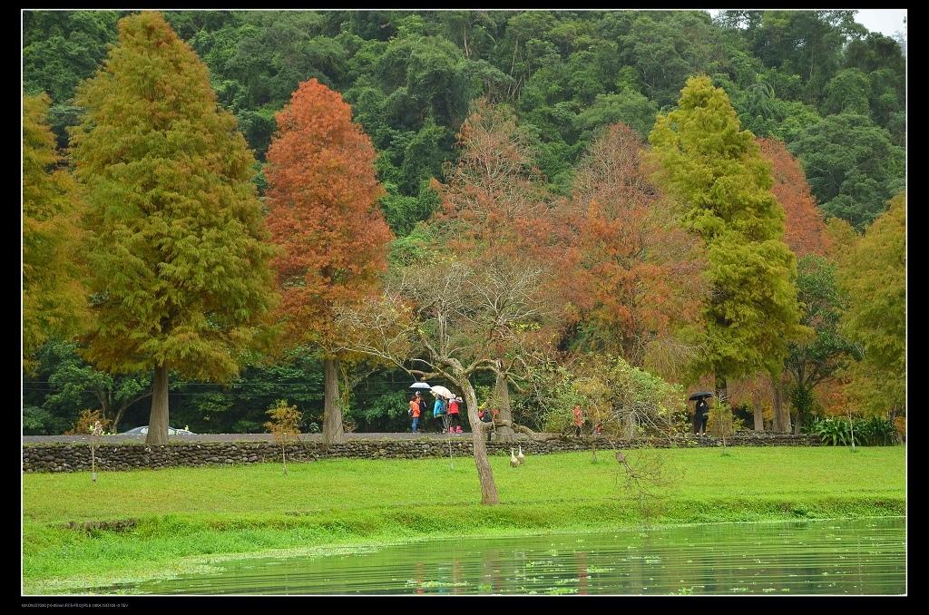 河岸樹.jpg