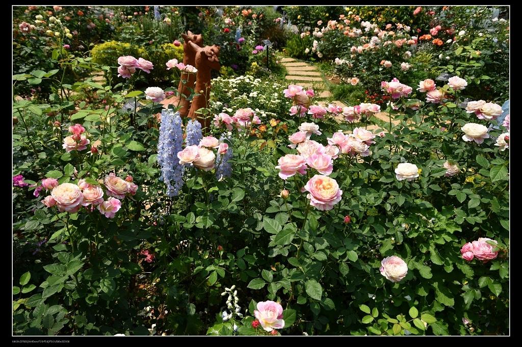 玫瑰花園.jpg