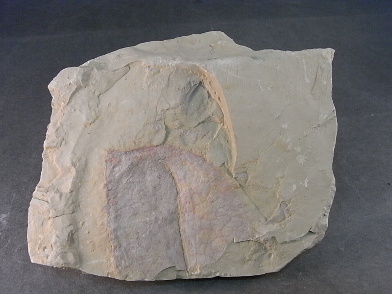 RIMG1731