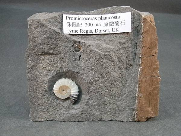 RIMG1659