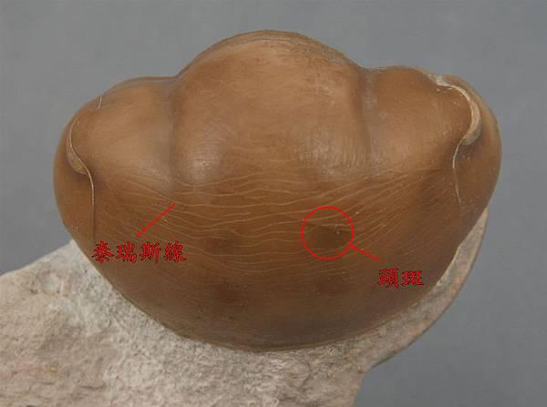 ILLAENUS SARSI6