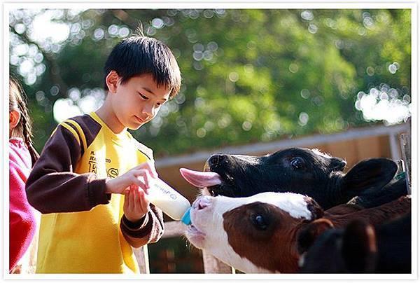 四方鮮乳牧場1