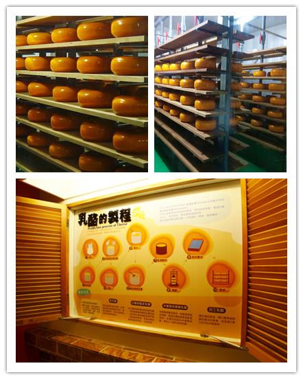 四方鮮乳酪故事館8