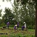 富良野 TOMITA