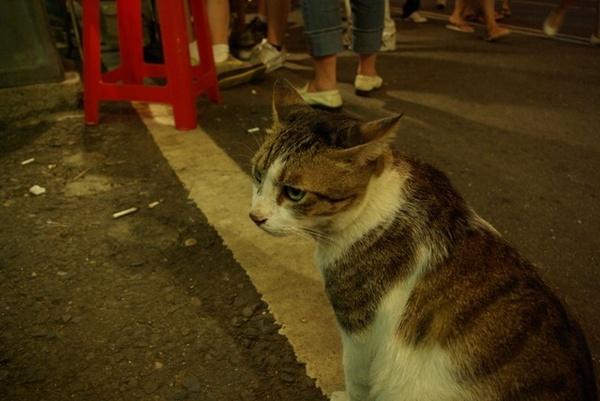 街上賣冰淇淋的貓