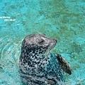 戶外的海豹