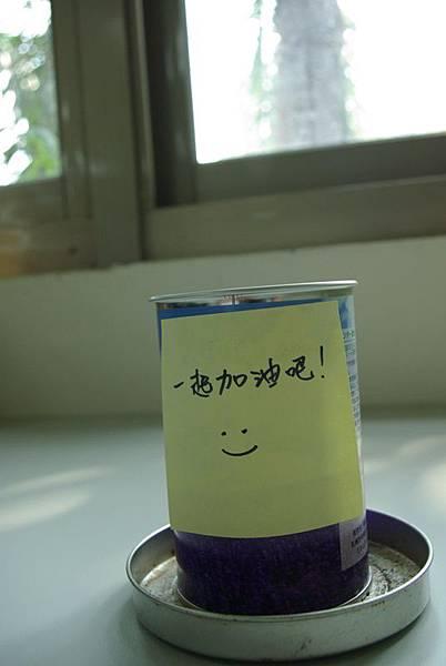 北海道買的薰衣草罐頭