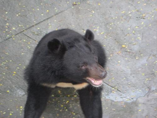 廣州動物園裡的熊