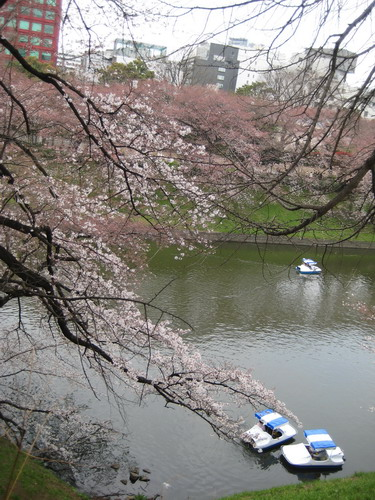 20090331 japan16.jpg