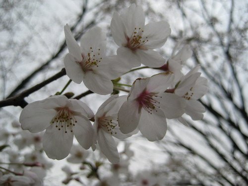 20090331 japan18.JPG