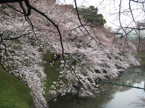 20090331 japan21.JPG