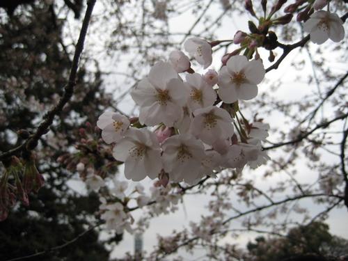 20090331 japan24.jpg