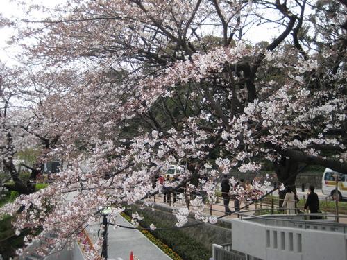 20090331 japan31.JPG