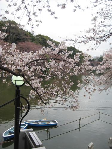 20090331 japan32.jpg