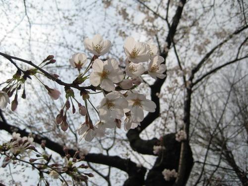 20090331 japan34.JPG